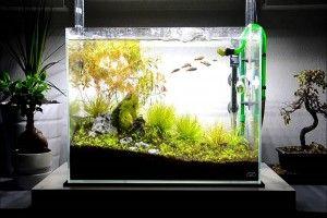 Оформлення акваріума своїми руками: грунт, корчі, акценти