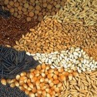 Близько 70% насіння, яке використовують вітчизняні аграрії, імпортне
