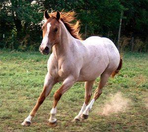 Описи кращих мастей коней
