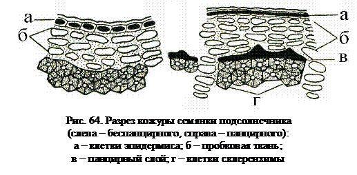 Визначення панцирних соняшнику