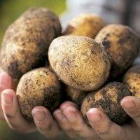 Визначення забрудненості картоплі