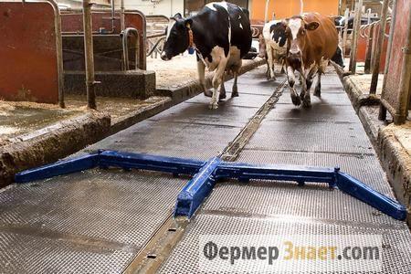 Основні характеристики систем гноєвидалення в корівниках