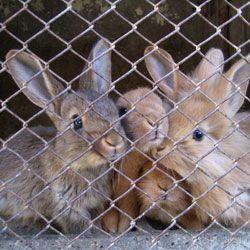 Основні моменти при розведенні кроликів в домашніх умовах