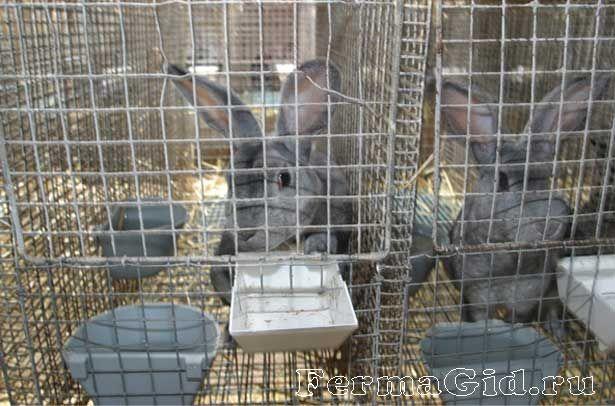 Кролики в клітці з поїлки і годівницею