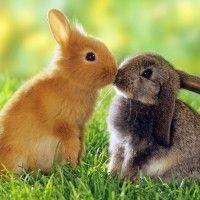 різновиди кроликів