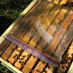 Основні види і вимоги до годівниць для бджіл, самостійне виготовлення