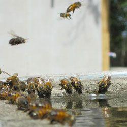 Основні види і вимоги до поїлки для бджіл, виготовлення своїми руками