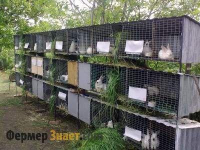 Шеди для кроликів