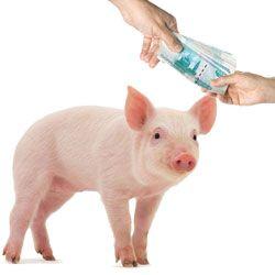 Основи розробки бізнес-плану для організації свинарства як бізнесу