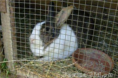 кролик в клітці