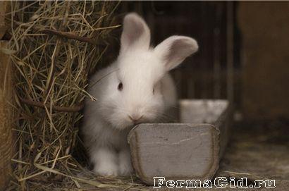 кролик в клітці з годівницею для сіна