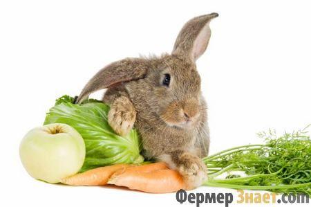 Кролики люблять овочі