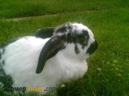 Кролик метелик на траві