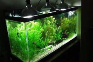 Освітлення акваріума своїми руками