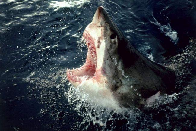 Австралійка постраждала від нападу акули під час відпочинку на Пхукеті.