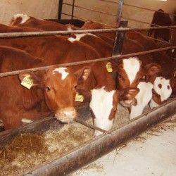 Відгодівлю худоби