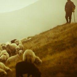 Вівчарство україни традиції