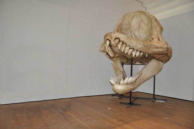 Розміри черепа наводять жах. А які зуби!