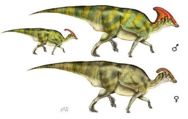 Самець і самка Паразауролофусов.