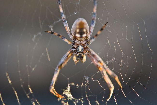 Павуки окупували міст в сша
