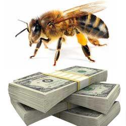 Бджолиний бізнес: як досягти успіху, підрахунок витрат і рентабельності
