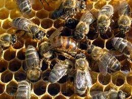 Бджільництво підготовка до зими (відео)