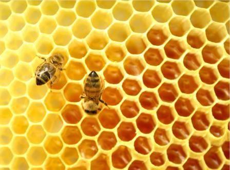 Бджоли навесні відео