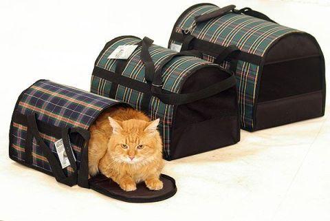Перенесення для кішки - основні види, як вибрати і на що звернути увагу