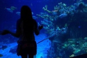 Перезапуск акваріума