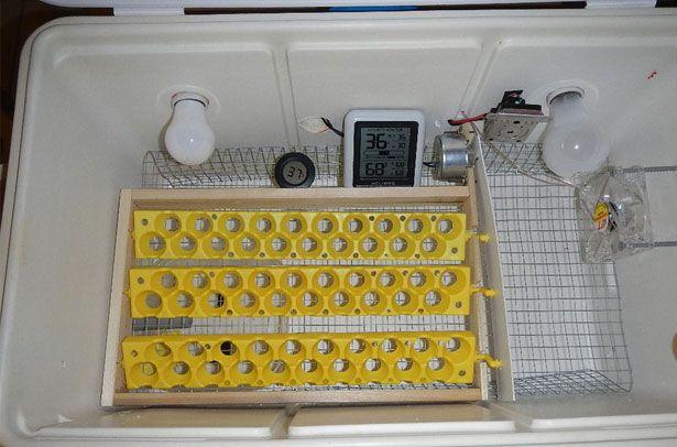 Інкубатор для перепелиних яєць