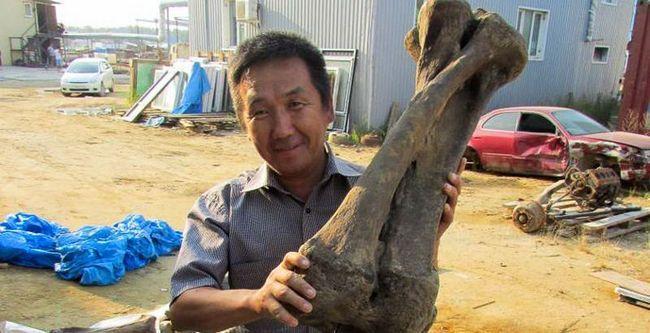 В якутії знайшли скелет найбільшого слона, що жив 100 000 років тому