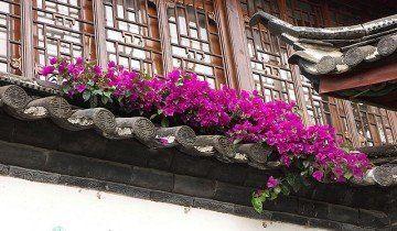 Червона петунія на балконі, thelovelyplants.com