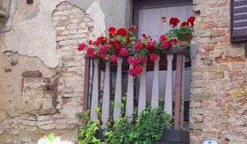 Незвичайні петунії на балконі, ning.com