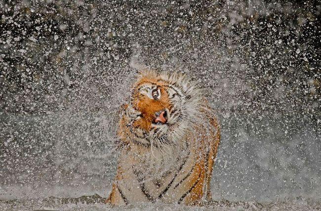 Переможці конкурсу National Geographic Photo Contest 2012