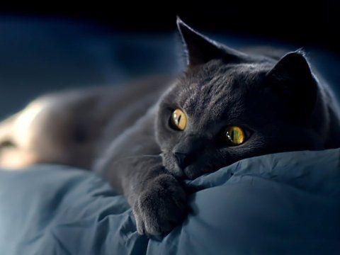 Чому кішки йдуть з дому, молоді та старі