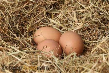 Яйця в курячому гнізді