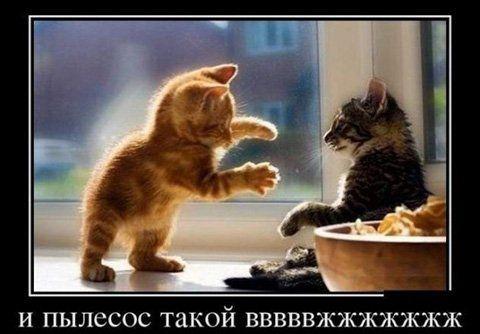 Чому майже всі кішки бояться пилососа - причини і способи усунення страху