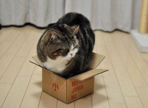 Чому все кішки так люблять коробки, шафи та інші затишні місця