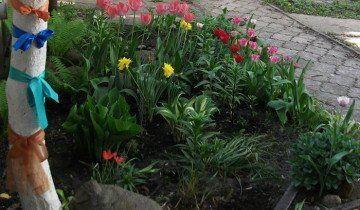 Фото клумби тюльпанів біля будинку, radikal.ru