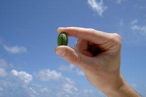 Найменший кавун в світі