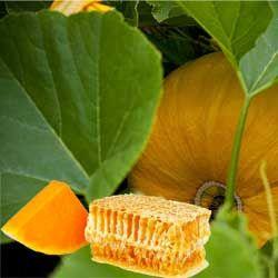 Корисні і лікувальні властивості гарбузового меду
