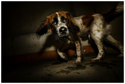 Корисні поради по догляду за здоров`ям собаки
