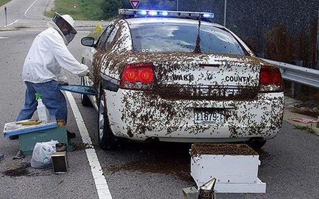 Поліцейського атакували 50 тисяч бджіл