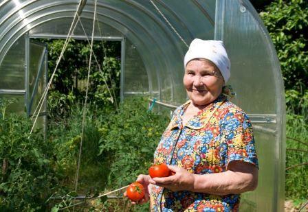 Помідори в теплиці з полікарбонату, як садити і доглядати, поради