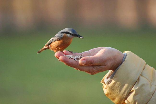 Поползень - птах поодинока.