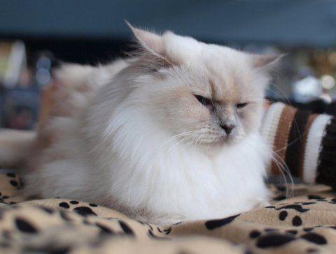Кот пісяє на стіни - що робити і як відучити його від згубної звички