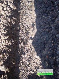 Поготовку грунту до посадки квасолі