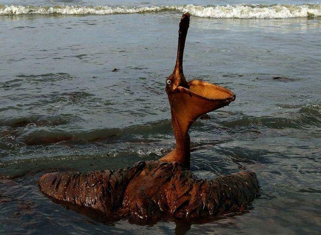 Наслідки розливу нафти в Мексиканській затоці
