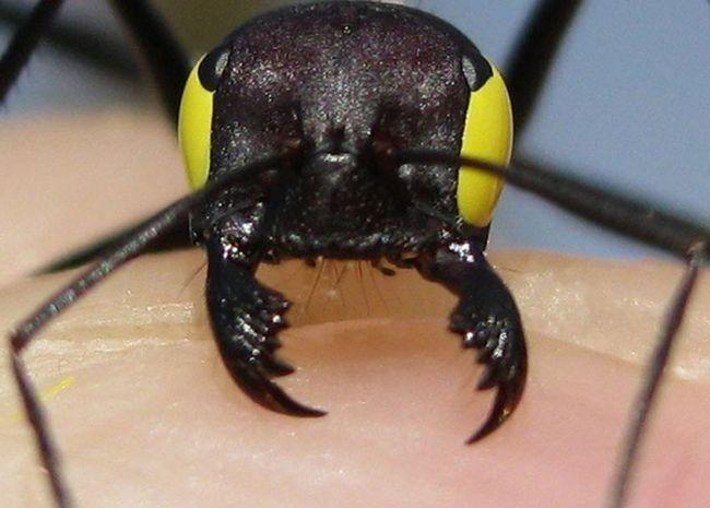 Пов`язка на очах завадила мурашкам повернутися в гніздо