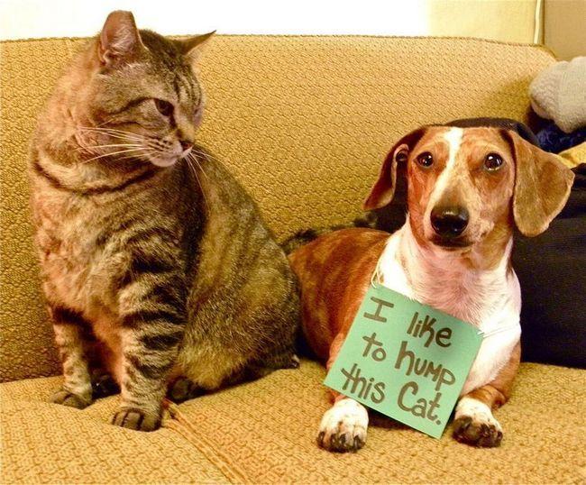Ганебний стовп для тих, що провинилися собак